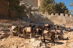 Grecja, osły przy odpoczynkiem fotografia stock