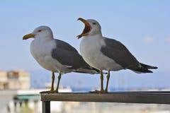 Grecja, zoologia, ptaki zdjęcia stock