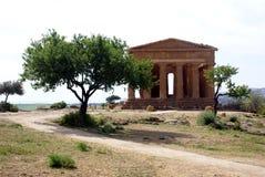 grecki oliwny świątynny drzewo Zdjęcia Royalty Free