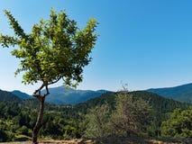 Greckie góry, zieleń krajobraz obrazy royalty free