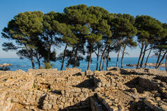 Greco roman ruins of Emporda, trees and sea Stock Photos