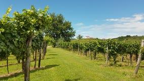 Gredic castle in vineyard Stock Images