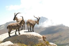 Gredos Stock Photos