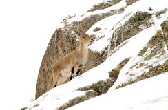 Gredos mountain Stock Images