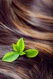 护发概念:有聚焦和gree的美丽的发光的头发 免版税库存图片