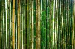 Gree bamboo wall design for home decoration. The green bamboo are making for house wall Royalty Free Stock Photo