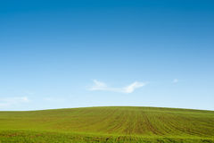 Gree field blue sky horizon Royalty Free Stock Image