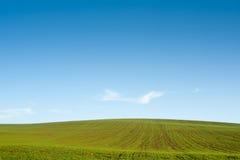 Gree field blue sky horizon Royalty Free Stock Image