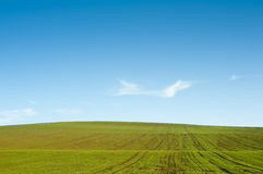 Gree field blue sky horizon Royalty Free Stock Photography
