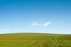 Gree field blue sky horizon Royalty Free Stock Photography