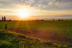 Gree field at sunset Stock Photography