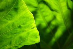 Gree leaf background Stock Image
