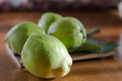 The gree quince, italy, apulia Stock Photo