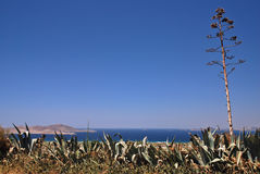 Greece and agave Stock Photo