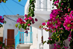 In the  greece antorini europe old house    and Stock Photo