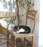 Greece, Cat royalty free stock photo