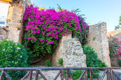 Greece, Chania, Crete.Traditional  street Royalty Free Stock Images