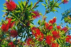 GREECE, CRETE, BALI. Beautiful exotic flowers. Crete, Greece Royalty Free Stock Image
