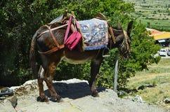 Greece, Crete, donkey Royalty Free Stock Images