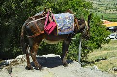 Greece, Crete, Donkey. With equestrian saddle - mode of transport for tourists to Zeus cave stock photo