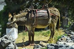 Greece, Crete, Donkey stock image