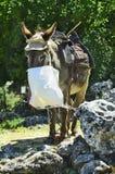 Greece, Crete, donkey Stock Image