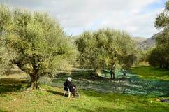 Greece, Crete, Harvest royalty free stock photo