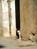 Greece, cute stray kitten Royalty Free Stock Images