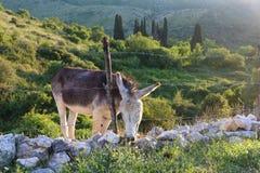 Greece donkey Stock Images
