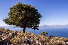 Greece hill flower Stock Image