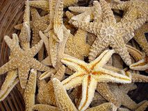 Greece, island of Kos, dried sea stars for sale and stacked stock photography