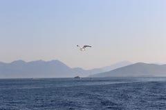 Greece Island with Seagull bird Stock Image