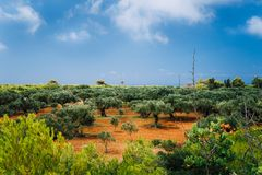 Greece islands landscape with agriculture fields of olives on red clay soil royalty free stock images