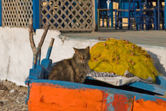 Greece Karapathos island Lefkos village. A cat takes a nap in a fishing net stock images