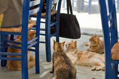 Greece, Karpathos Island Finiki village. In the fish restaurants the Greek cats are under the tables royalty free stock photos