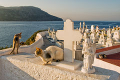 Greece, Karpathos Island Pigadia Town. The Pigadia cemetery overlooks the Aegean Sea. This is the kingdom of free cats royalty free stock photo