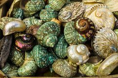 GREECE - November, 2017: beautiful, bright, colorful pearl seashells. Occupying the entire field of view. Selective focus Royalty Free Stock Photo