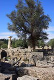Greece Olympia Ruins Stock Image