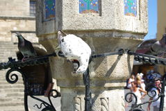 Greece, Rodos. Greece Rodos, Rodos town, old castle by Order of Maltaб  square with Dove Stock Photos