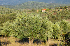 Greece, rural landscape Royalty Free Stock Photography