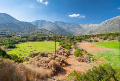 Greece rural landscape: a flock of sheep on the grasslands in valley and mountains. In the sunny summer day, island Crete, village Bali, Greece Royalty Free Stock Photos