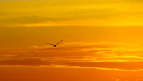 greece seagullsolnedgång Arkivbilder