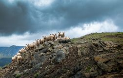 Greece, Sheep, Hill, Clouds, Herd Stock Photography