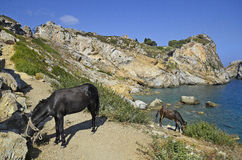 Greece, Skiathos Island royalty free stock image