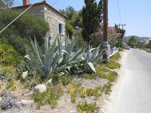 Greece typical view of an old building aloe plants and an empty street in the summer heat. Summer holiday vacations stock images