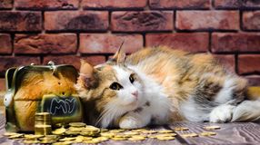 Greed motley fluffy cat guarding a mountain of coins and piggy bank. Greed fluffy cat guarding a mountain of coins and piggy bank stock images