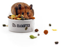 Greedy hamster Stock Images