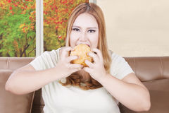 Greedy overweight woman eats burger. Photo of a greedy overweight woman with blonde hair eating a big hamburger at home, concept of unhealthy lifestyle Stock Image