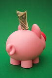 Greedy pig! Stock Images