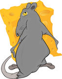 Greedy rat and cheese piece Stock Photo